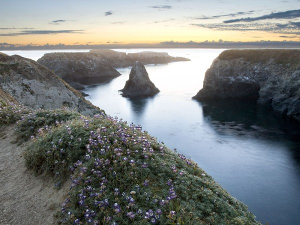 The flower-covered headlands around Mendocino are perfect for quiet contemplation